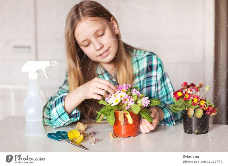Mädchen kümmert sich um Pflanzen in ihrem Haus Spray Wasser Pflege schön Kind Fenster Zimmerpflanze Flasche Gartenarbeit grün Natur Sprühgerät Gerät Blume Blatt