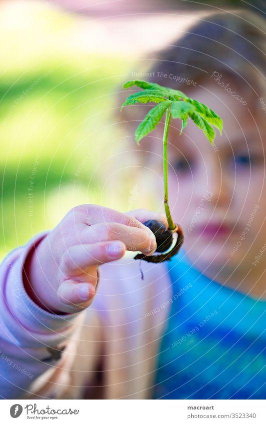 Kind mit Kastanienbäumchen mädchen kastanie kastanienbaum setzling baum pflanzen wurzeln frühling einpflanzen lernen entdecken aufforsten wald blätter trieb