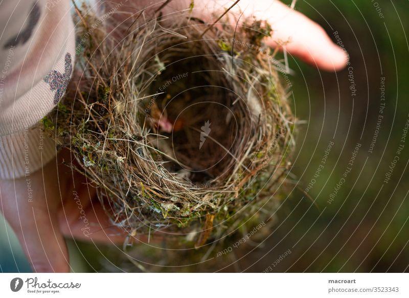 Vogelnest runtergefallen heruntergefallen daunen äste zweige haus behausung vögel nisten kinderhände alten festhalten heimat sicherheit zu hause zuhause federn