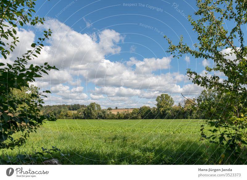 Blick durch Bäume auf eine grüne Wiese mit Hügeln und bewölktem Himmel Ansicht Feld Sommer Sträucher Gras Landschaft Natur Baum schön blau im Freien natürlich