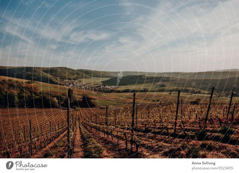 Weinberg in der Abenddämmerung II Idylle Moseltal Ferien & Urlaub & Reisen Tourismus Rheinland-Pfalz Europa Mosel (Weinbaugebiet) Deutschland Sonnenuntergang
