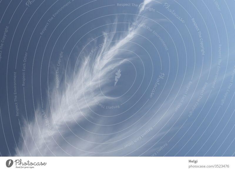 Federwolken oder Cirruswolken vor blauem Himmel Wolke Wetter weiß Schönes Wetter Menschenleer Natur Umwelt Außenaufnahme Farbfoto Klima Licht filigra zart