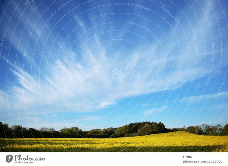 sky movie raps rapsfeld rapsblüte leben lebending himmel gelb blau frisch frühling luftig wild landwirtschaft perspektive panorama horizont