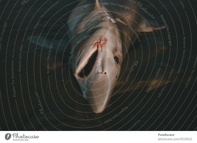 #As# Hai Haifisch Meer Meereslandschaft Meeresfrüchte Meerwasser Meeresboden Tod Todesblick Todeskampf sterben Tier Totes Tier