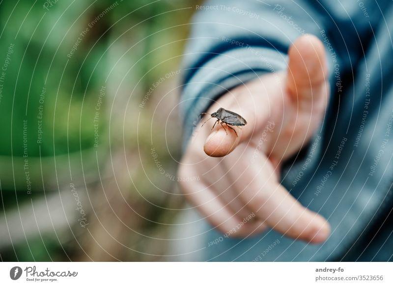 Käfer auf dem Finger Baumwanze Wanze Waldwächter Hand Kinderfinger Kinderhand Insekt Makroaufnahme Außenaufnahme Schwache Tiefenschärfe