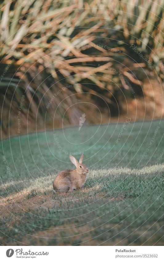 #AS# Flucht-Hase Hase & Kaninchen Hasenjagd Hasenlöffel Hasenpfote Hasenbraten Hasenohren Außenaufnahme Natur
