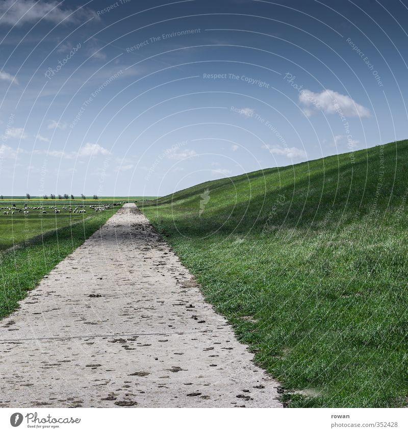 freie bahn Natur Landschaft Gras Wiese Feld Straße Wege & Pfade frisch Perspektive Ziel gerade Freiheit Deich Nordsee wandern Himmel grün Spaziergang Spazierweg