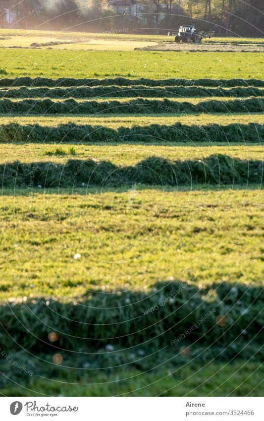 Traktorfahrbahnen Heu Wiese mähen Feld Heuwiese Feldarbeit Landwirtschaft Heuernte Futter Ackerland gelb grün hellgrün grasgrün Gras Sommer Ernte Erntezeit