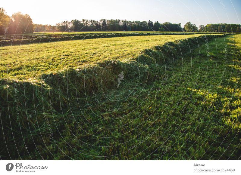 nach getaner Arbeit Heu Wiese mähen Feld Heuwiese Feldarbeit Landwirtschaft Heuernte Futter Ackerland gelb grün hellgrün grasgrün Gras Sommer Ernte Erntezeit