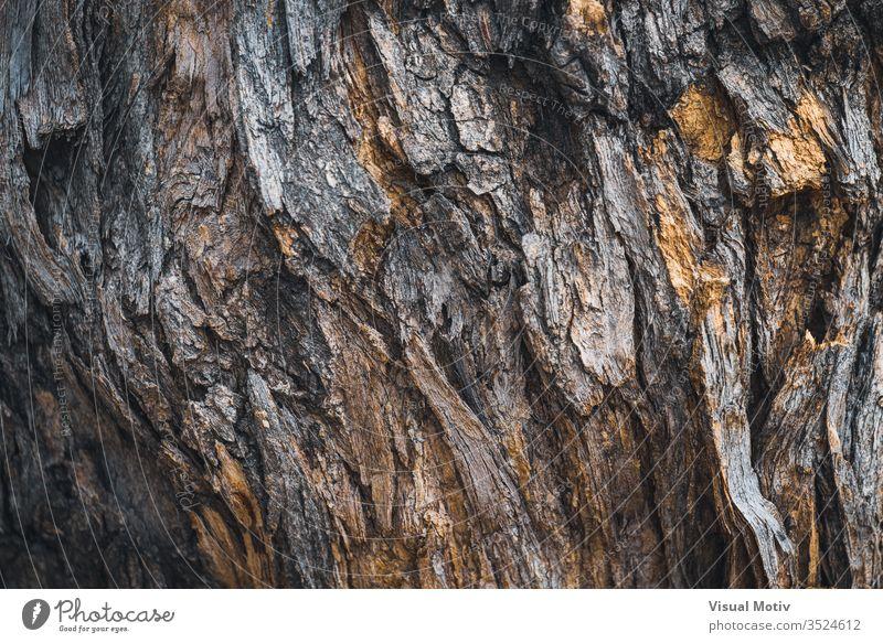 Textur der Rinde von Styphnolobium japonicum, allgemein bekannt als Pagodenbaum Farbe keine Menschen Detailaufnahme strukturierte Oberfläche Rindenoberfläche
