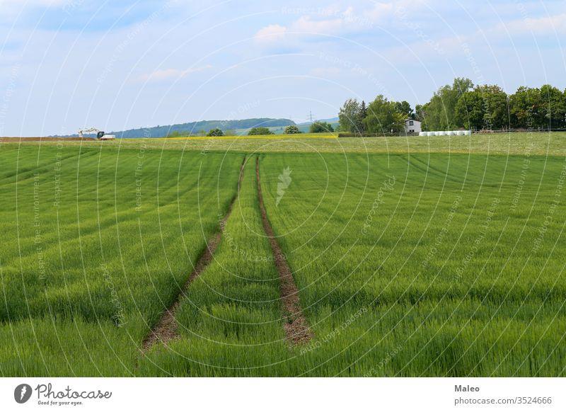 Frühlingslandschaft mit einem Winterweizenfeld Feld Landschaft Gras grün Natur Saison Weizen Himmel Horizont ländlich Wiese Bauernhof blau Cloud sonnig Tag weiß