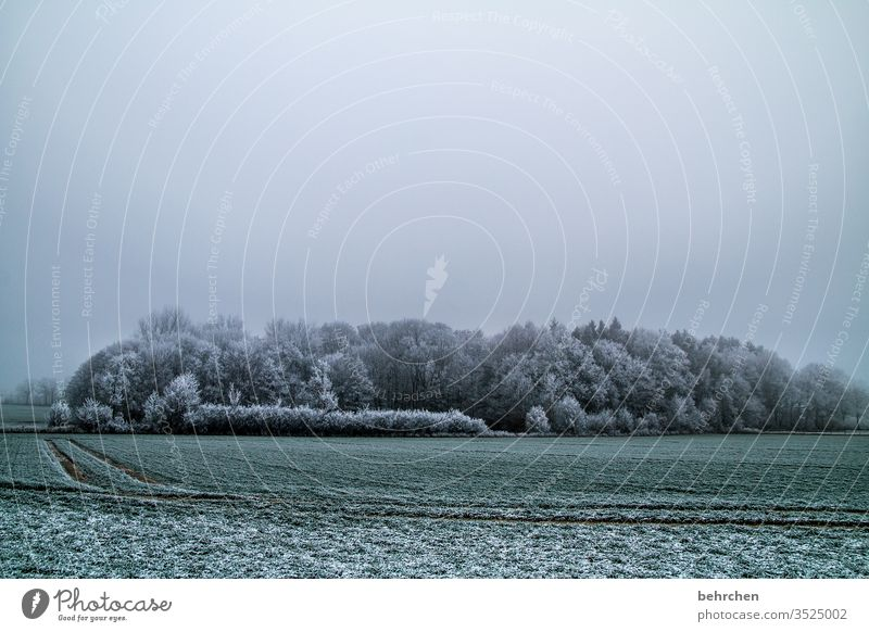 stille Winter Wald Schnee Bäume Frost Landschaft Natur Umwelt Wiese Feld Herbst laub Herbstlaub Herbstlandschaft Winterlandschaft kalt Kälte frieren gefroren