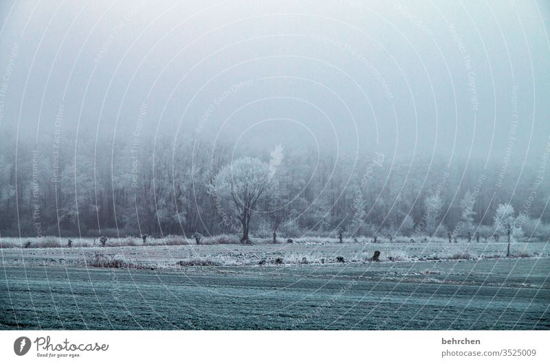 abkühlung für biti;) Pflanze Schneelandschaft Eis Winter Wald Bäume Frost Herbstlandschaft Feld Wiese Umwelt Natur Landschaft Winterlandschaft kalt Kälte