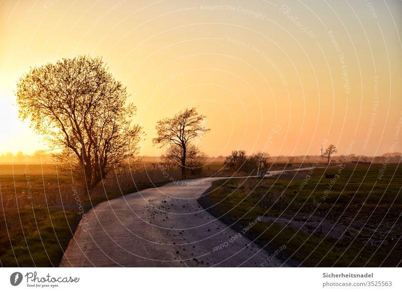 Landweg bei Sonnenuntergang Landschaft Sonnenlicht Warmes Licht Außenaufnahme Menschenleer Abend Gegenlicht Natur Sonnenstrahlen Schönes Wetter Farbfoto ruhig