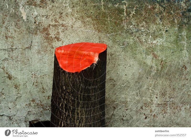 Baum Umwelt Natur Pflanze Klima Klimawandel Wetter schlechtes Wetter Wald Wüste kaputt baumfällung Baumstamm gefallen schnitt schnittfläche wallroth Abholzung