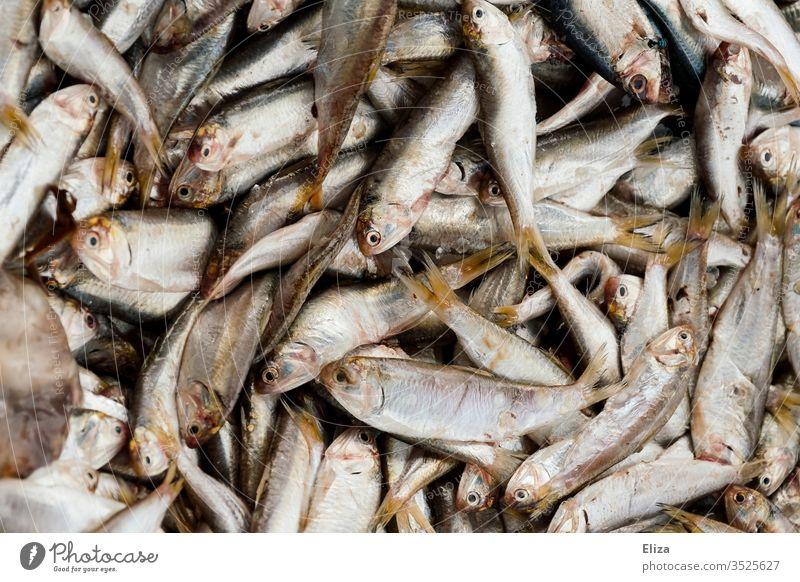 Viele frisch gefangene Fische auf einem Haufen Fischfang silber viele nah tot Menschenleer Fischerei Fischereiwirtschaft Nahrung Nahaufnahme Tier Fischmarkt