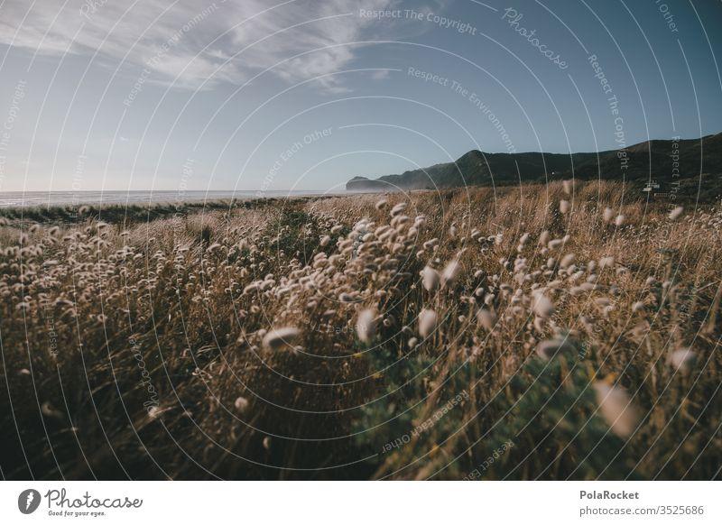 #As# Neuseelandschaft Neuseeland Landschaft Wiese Wiesenblume Wiesenblumen Wind Küste Piha Berge u. Gebirge Idylle Paradies friedlich Natur Außenaufnahme