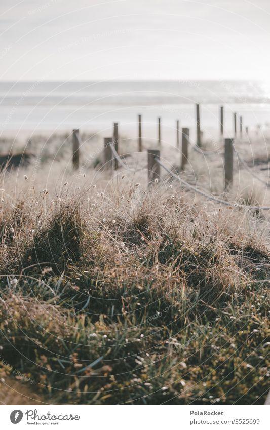 #AS# Dünengang Wind halme Neuseeland Wiesenblumen Natur zart weich Außenaufnahme Farbfoto Landschaft Himmel Gras Strand Küste Dünenweg Dünenschutz Dünenkamm