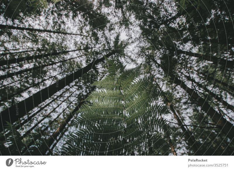 #As# Vorne Grün Hinten Grün Farn Farnblatt Farne Farnblätter farnwuchs Farnzweig Baum Baumstamm Lichtung Neuseeland Neuseeland Landschaft grün Grünpflanze