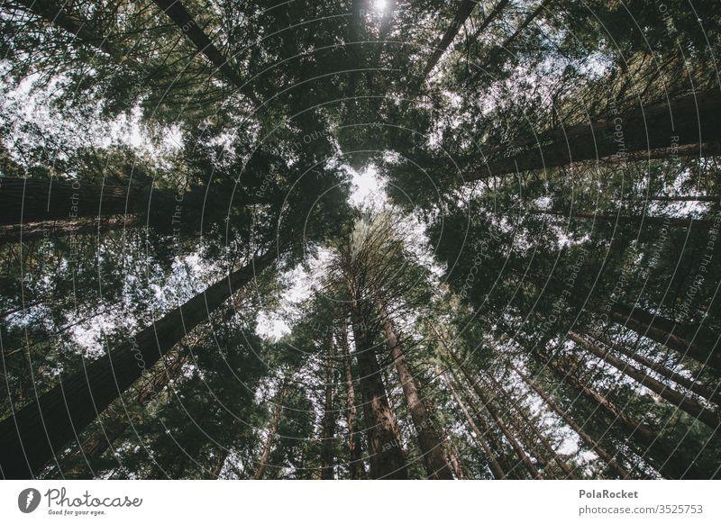 #As# Eine Crowd Bäume Wald Waldlichtung Waldspaziergang Waldstimmung wandern Wanderung Natur Naturschutzgebiet Naturliebe Außenaufnahme Farbfoto Tag Landschaft