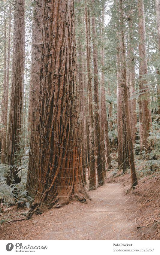 #AS# RedWood Redwoods NP Bäume Rinde Wald Baum Außenaufnahme Baumstamm Natur grün Waldstimmung Waldrand Waldboden Waldlichtung Waldspaziergang Neuseeland