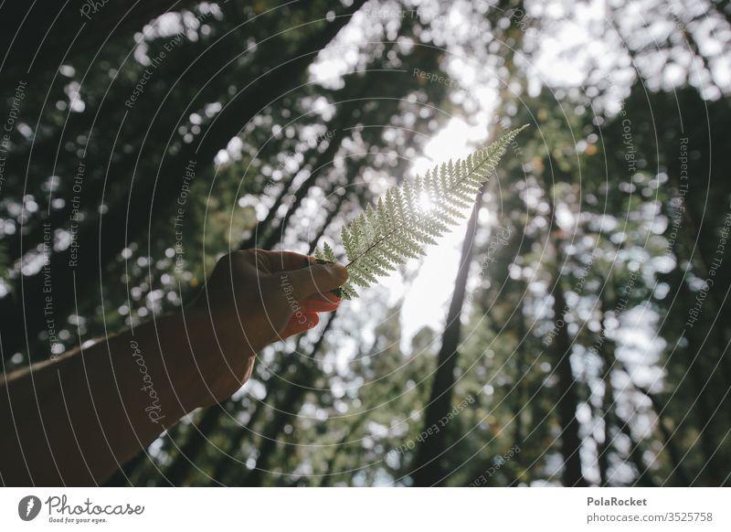 #As# Farn im Licht Farnblatt Farne Farnblätter farntrieb Farnstengel Hand haltend Wald Natur Naturschutzgebiet Naturliebe Naturerlebnis Pflanze Farbfoto grün