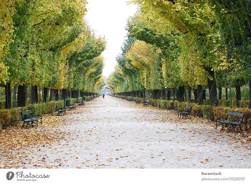 Ein Herbstspaziergang im Schlosspark Schönbrunn Herbststimmung Herbstwanderung Wanderung Spaziergang Allee Park Weg Bäume Buchen Blätter Laub Herbstlaub bunt