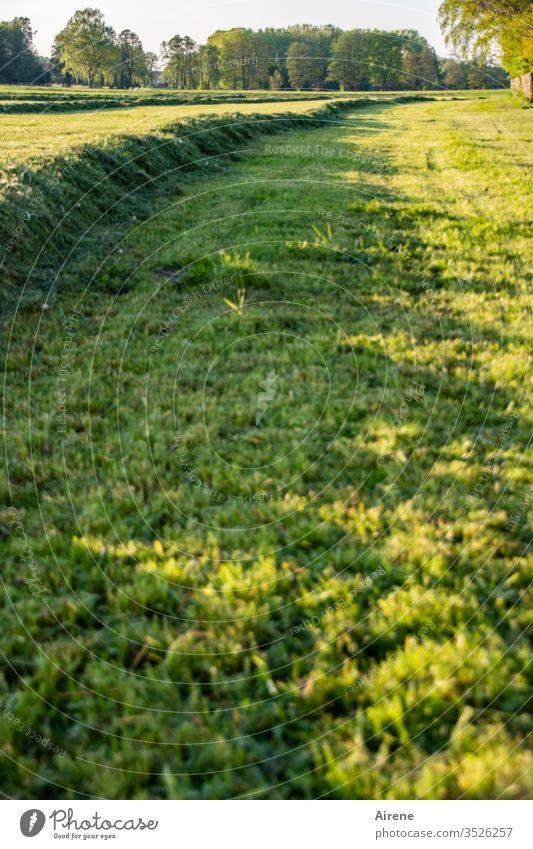 A gmahde Wiesn | wörtlich genommen Heu Wiese mähen Feld Heuwiese Feldarbeit Ackerbau Natur Landschaft Arbeit & Erwerbstätigkeit Umwelt Tag ländlich