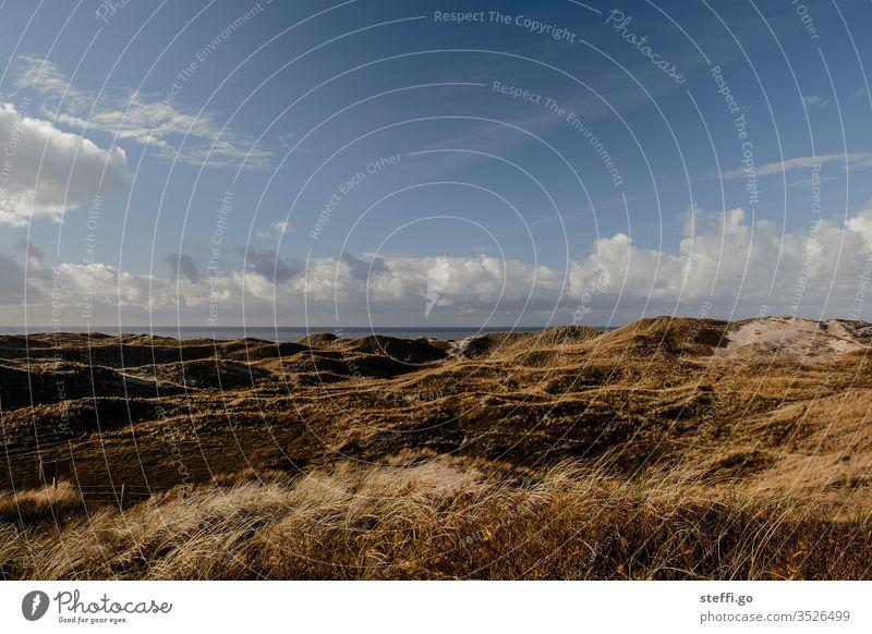 Dünenlandschaft in Dänemark am Meer mit blauem Himmel Hvide Sande Nordsee Dünengras dünenlandschaft Gras Umwelt Natur Außenaufnahme Farbfoto