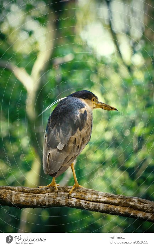 euer ehrwürden, der querdenker Tier Wald Vogel sitzen Wildnis hocken Reiher Schreitvögel ehrwürdig