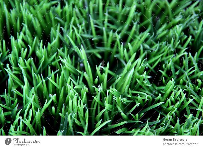 Gras grün Pflanze Flora Saison fallen Natur Hintergrund geblümt Frühling Schönheit Sommer Garten Farbe Nahaufnahme