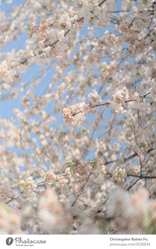 Frühlingsblüte in Berlin Regierungsviertel Blauer Himmel Bundesrepublik Deutschland ChristopherRatter Licht Großstadt hell Städtereise Ferien & Urlaub & Reisen
