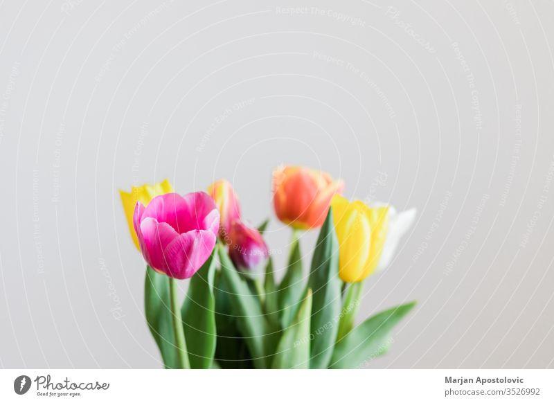 Schöne mehrfarbige Tulpen in einer Vase auf weißem Hintergrund Ordnung Festessen schön Schönheit Blütezeit Überstrahlung Blumenstrauß bauchig Haufen Farbe