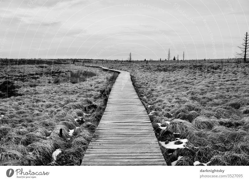 Hohes Venn Bohlen Weg im Winter hoge venen Natur Landschaft Menschenleer Außenaufnahme wandern Gras Hochmoor gräser Schnee graustufen schwarzweiß Moor Pflanze