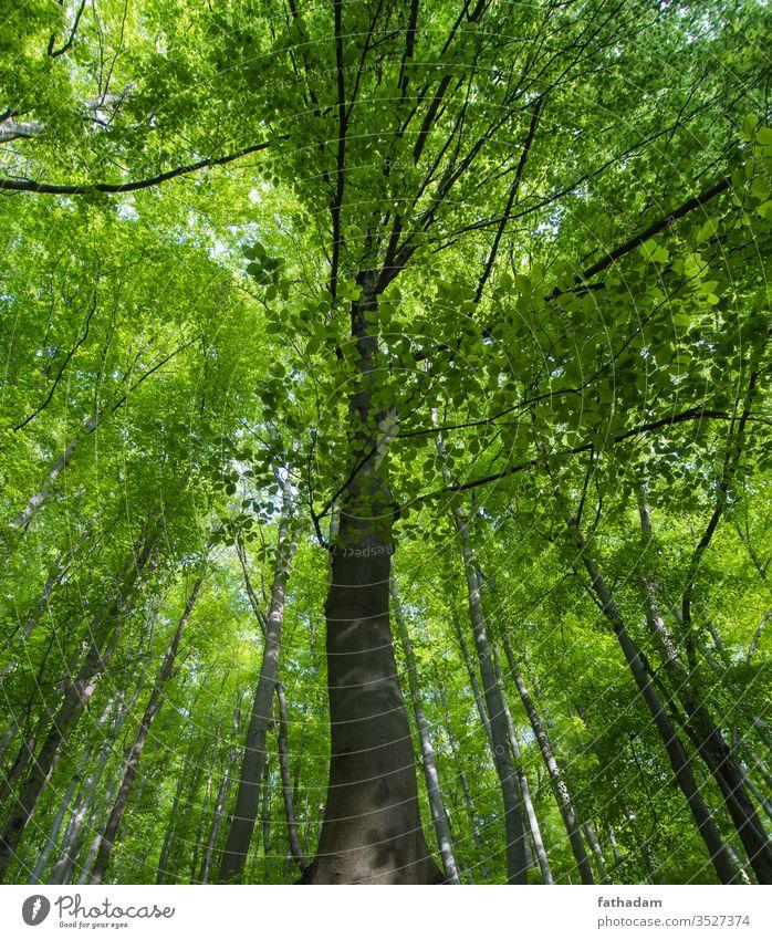 Schöner Buchenwald Detail Frühling im Freien Naturschutzgebiet Waldboden grüner Wald ruhig wild Szene üppig (Wuchs) Morgen Pflanze Sommer Tag Hintergrund Umwelt