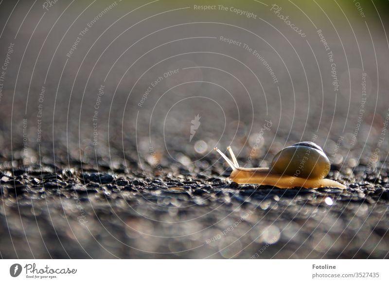 Immer mit der Ruhe! - oder eine kleine Schnecke kriecht, von der Sonne erläuchtet, über einen Weg. Ganz langsam. Schneckenhaus Tier Fühler schleimig