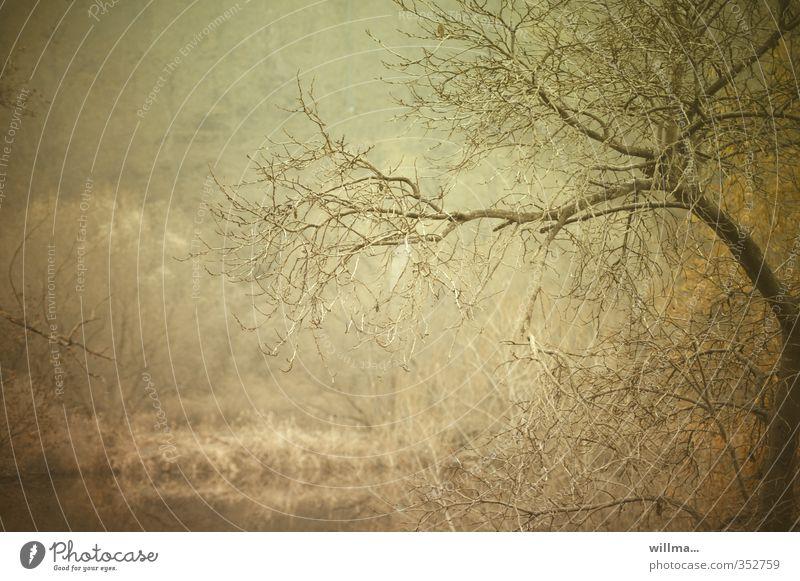 novembertag... Baum Landschaft Herbst Stimmung braun Nebel Flussufer bizarr kahl November Geäst Novemberstimmung