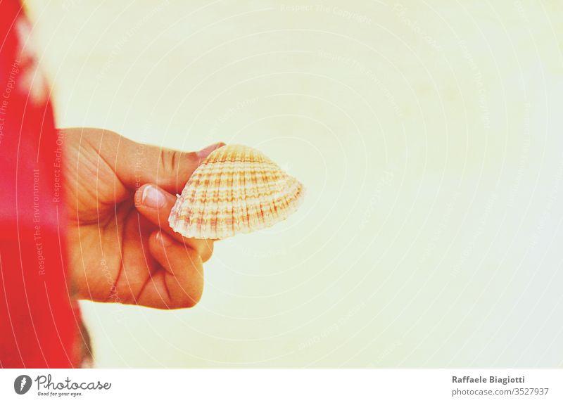 Schöne Muschel in der Hand eines Kindes Strand MEER Panzer Sand Hintergrund Meer Natur tropisch Urlaub Konzept Person Mädchen Wahl Trödel Erde Umwelt