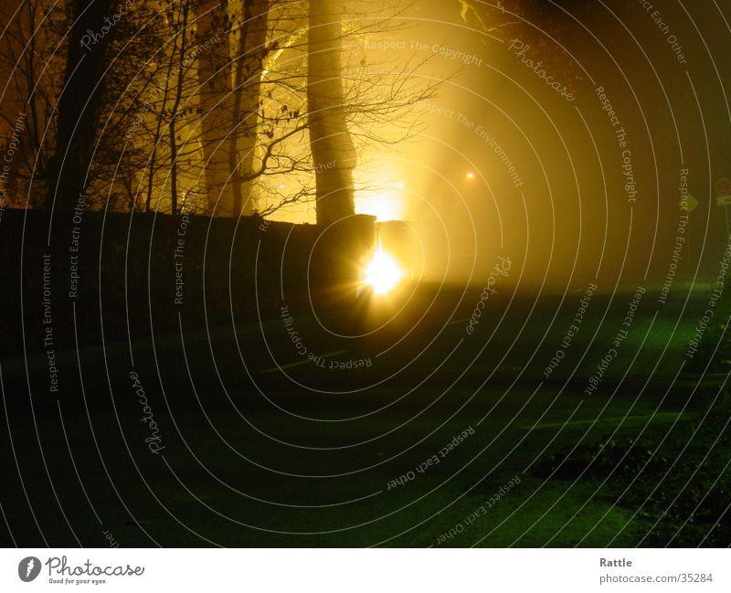 Nachtschwärmer Nebel Licht Baum Lichterscheinung Scheinwerfer