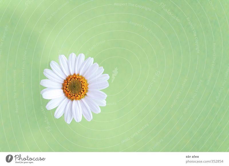 Liebesbarometer grün schön weiß Pflanze Blume Tier Umwelt gelb Frühling Blüte frisch Kitsch Verliebtheit Duft Valentinstag