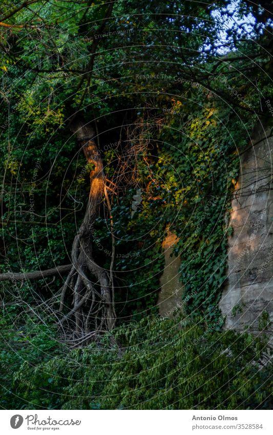 DER BAUM AN DER MAUER Berliner Mauer Wand Baum grün Licht Schatten Farbfoto Baumlicht leichter Baum grüne Wand Gemüse Vegetation