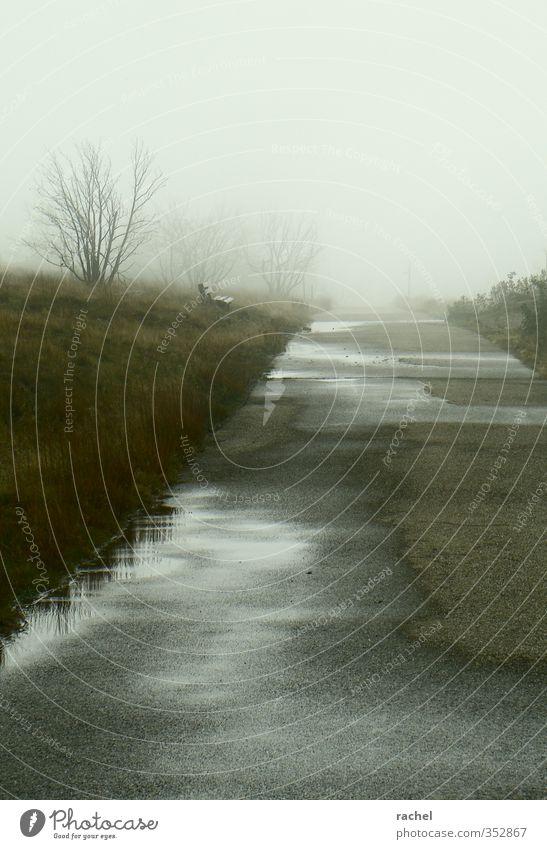 An einem Tag im Oktober Natur Baum Einsamkeit Landschaft ruhig dunkel Herbst Traurigkeit Wege & Pfade Regen Nebel trist nass Sträucher Bank Zukunftsangst