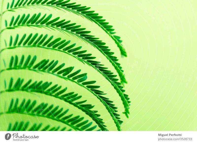 Baumblätter mit Leerstellen und sich bildenden Figuren Dekor tropisches Blattwerk Blätter grüne Blätter Idee Inspiration Frühling frisch farbenfroh dekorieren