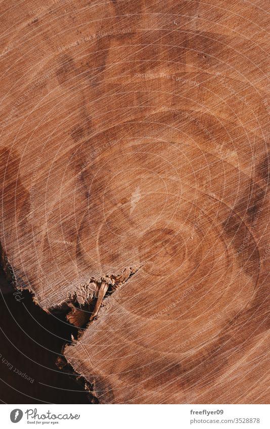 Holzstück von oben auf einem Holzuntergrund Textur Ressource Kratzer Ringe gealtert Material Hintergrund Baum Natur Totholz Leben Historie Nutzholz geschnitten