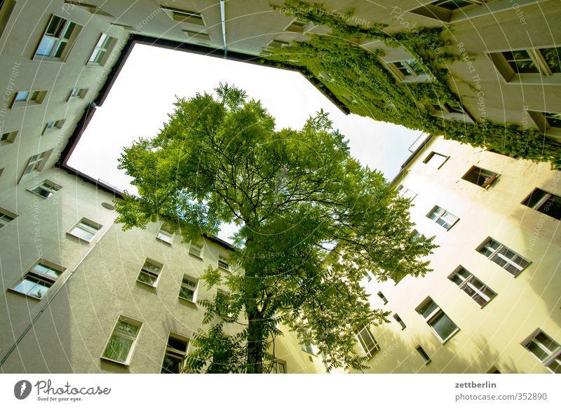 Baum im Hof Häusliches Leben Wohnung Haus Stadt Hauptstadt Stadtzentrum Bauwerk Gebäude Architektur Mauer Wand Fassade Fenster Ausdauer Sehnsucht Heimweh