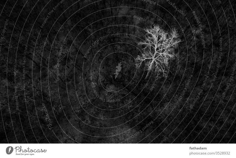 Schwarz-Weiß-Luftbild eines Baumes schwarz auf weiß Antenne Luftaufnahme Wald Landschaft Natur Vogelperspektive Schwarzweißfoto Gegenlicht Sonnenlicht