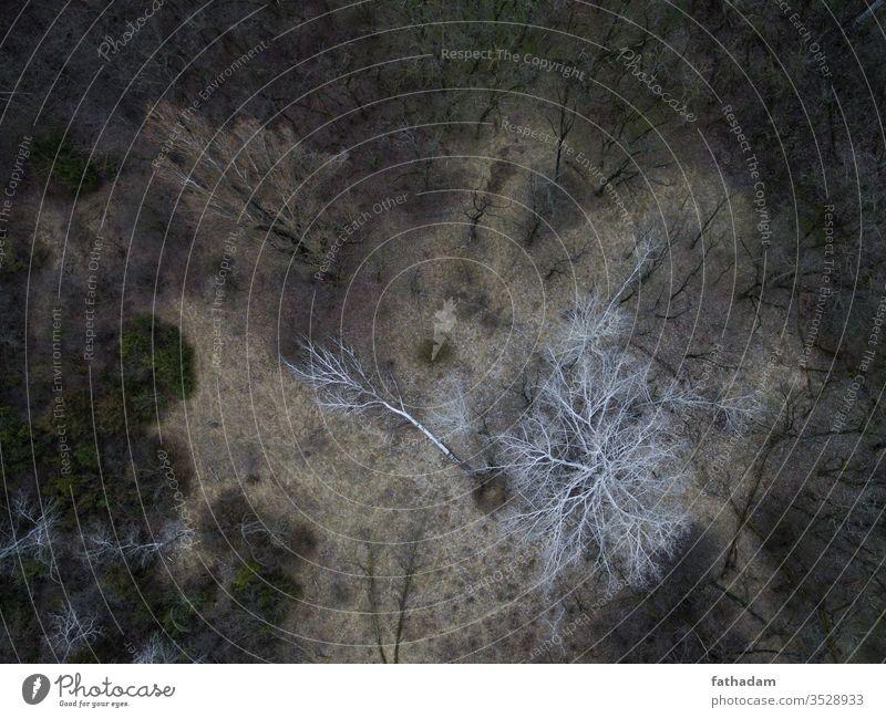 Luftaufnahme eines Waldes Baum Antenne Landschaft Natur Vogelperspektive Schwarzweißfoto Toter Baum düstere Stimmung weißer Baum Waldwiese