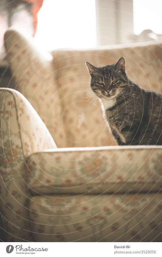 Katze sitzt auf einem alten Sessel rustikal melancholisch melancholie vergangenheit früher damals bei oma bei Großmutter retro ruhe ausstrahlung Katzenleben