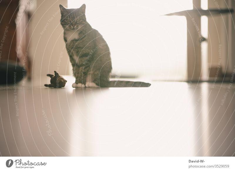 Hauskatze mit Spielzeug Katze Maus Stofftiere beobachten sitzen sitzend Aufmerksamkeit flur hausflur sehen Beobachtende Katze beobachtend Ruhe Licht Spiegelung