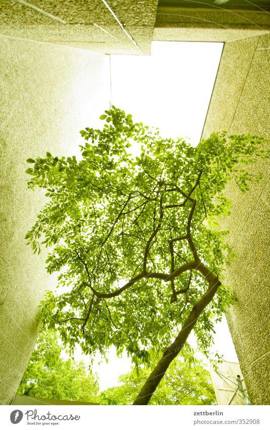 Baum (architekturbegleitend) Haus Umwelt Natur Himmel Sommer Klima Klimawandel Wetter Schönes Wetter Pflanze Stadt Hauptstadt Bauwerk Gebäude Architektur Mauer